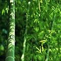 поклейка бамбуковых обоев цена